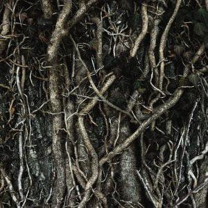 Spodbujevalci korenin