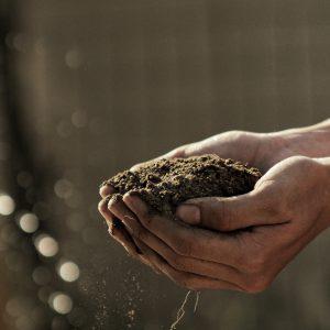 Gnojila za zemljo