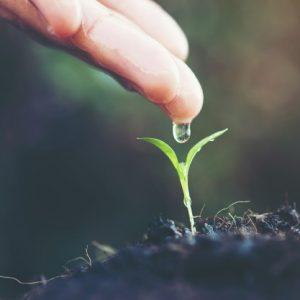 Gnojila za vse vrste substratov (zemlja ali kokos ali hidro)