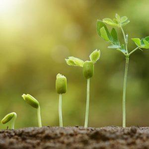 Spodbujevalci rasti