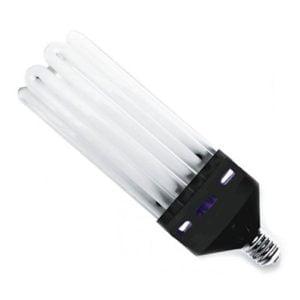 Sijalke CFL